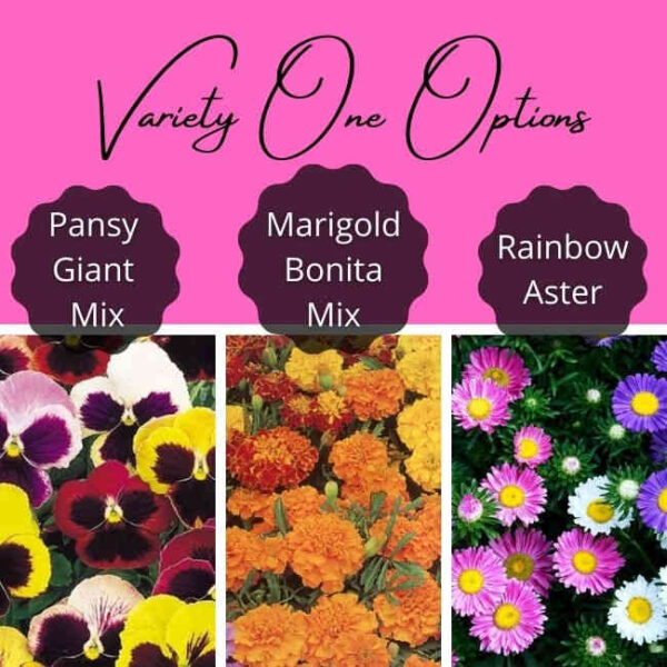 Variety One Options Choices