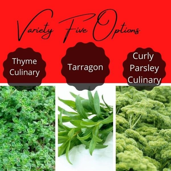 Variety Five Options